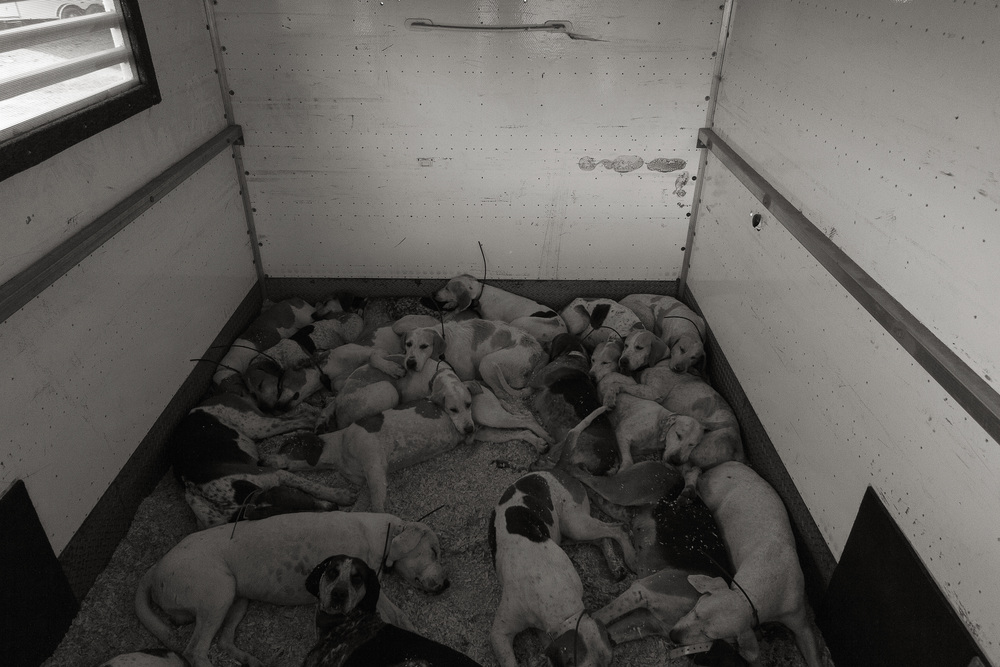 After the Hunt, back in the trailer, the Hounds are exhausted and fall asleep.