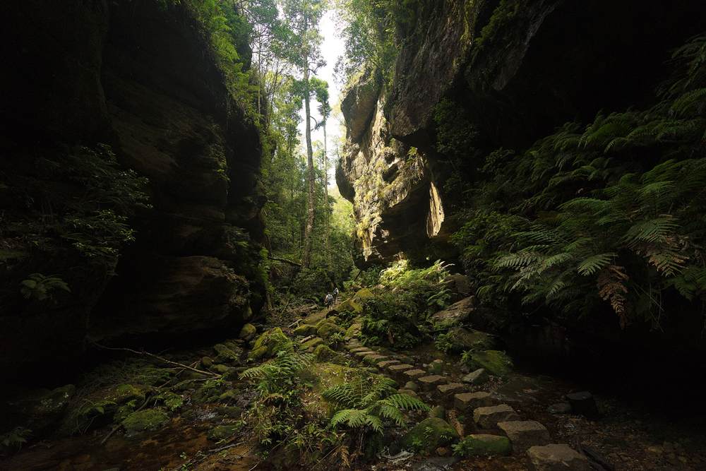The path leads over Rocks and throughdense fern vegetation.