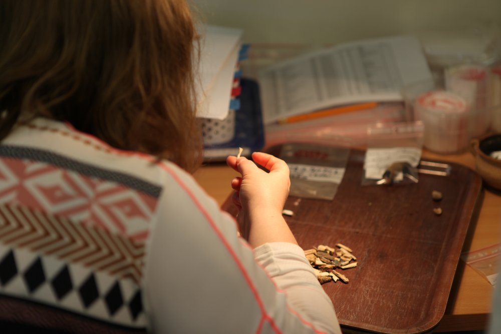 Albina identifying some bones from 19-20th c fisherman's cottage in Iceland.