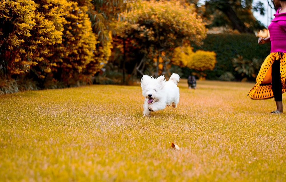 Chubby Run Chubby.jpg