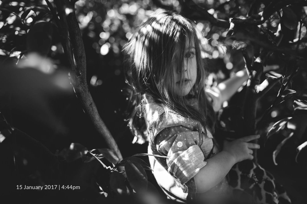 Melbourne lifestyle family photography. Black and white portrait of young girl in tree.