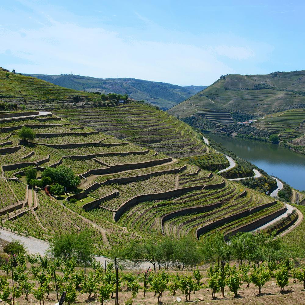 Douro Vista 2.jpg