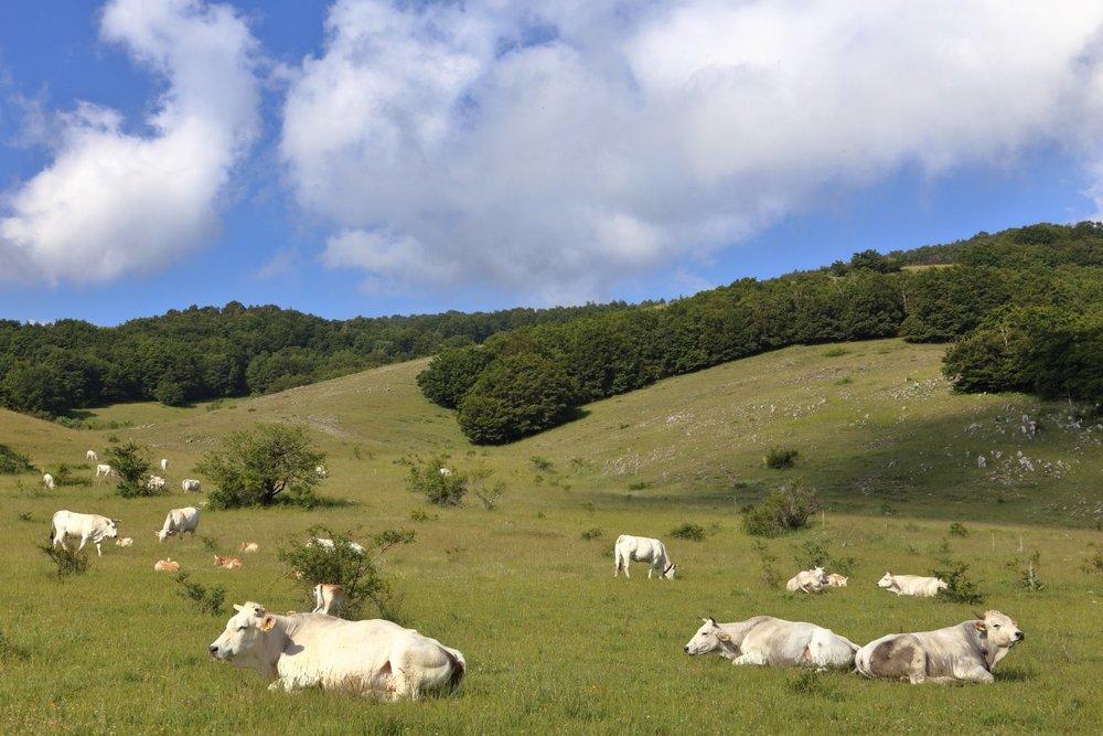 Abruzzo Landscape!    Spring time! 20 June 2015. Parco Nazionale d'Abruzzo, Lazio e Molise. Italy. 1/250 s, f/11, ISO 200, 40 mm, EOS 6D + EF 28-300 L