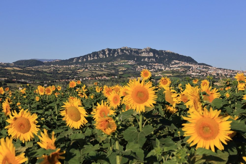 Titano Mount & Sunflowers!    Rep. of San Marino during summertime. 07 July 2014. 1/200 s, f/11, ISO 100, 60 mm, EOS 6D + EF 28-300 L