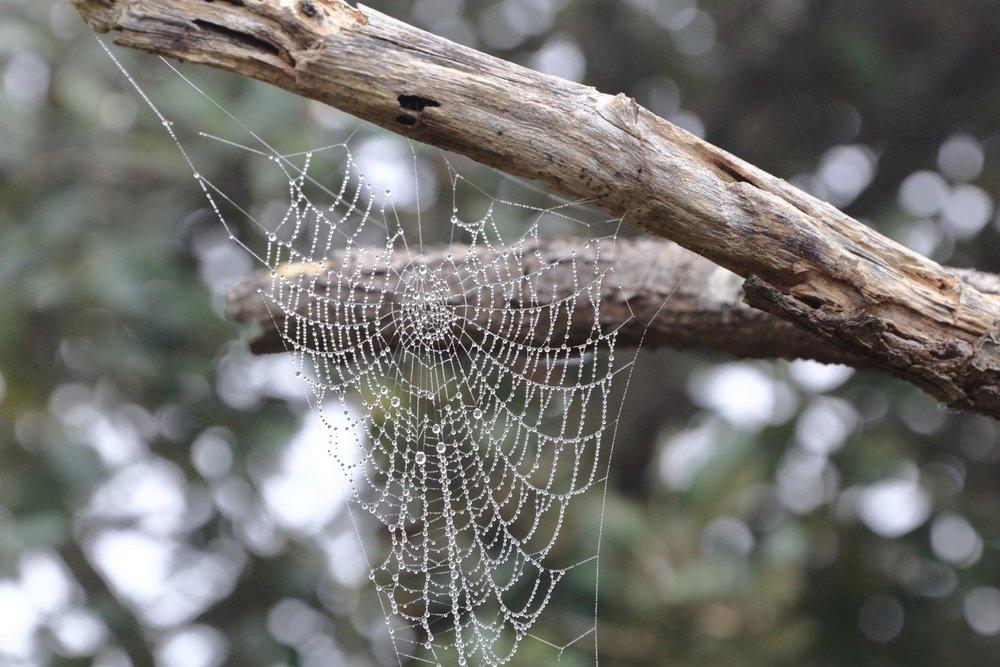 Spiderweb in autumn!    Rep. of San Marino. 22 November 2014. 1/250 s, f/11, +1 EV, ISO 2000, 300 mm, EOS 6D + EF 28-300L