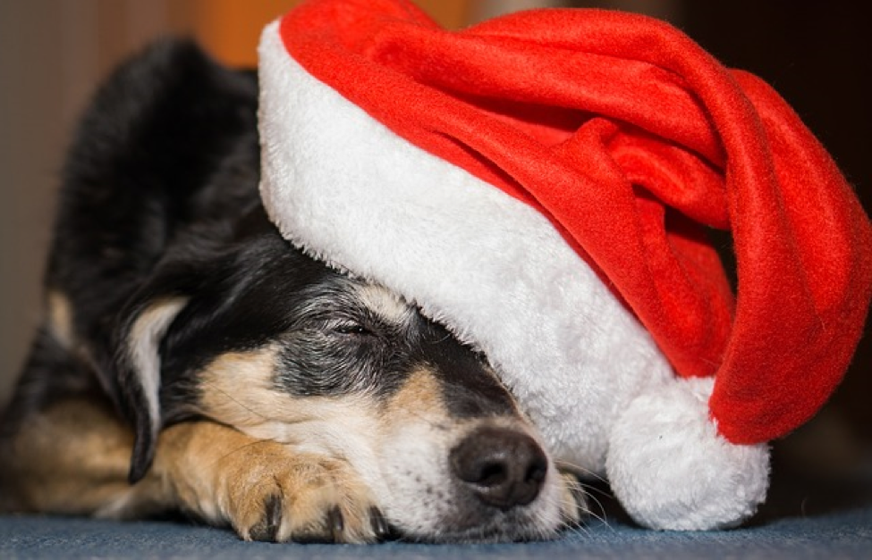 Great Gift Ideas for Dog Lovers