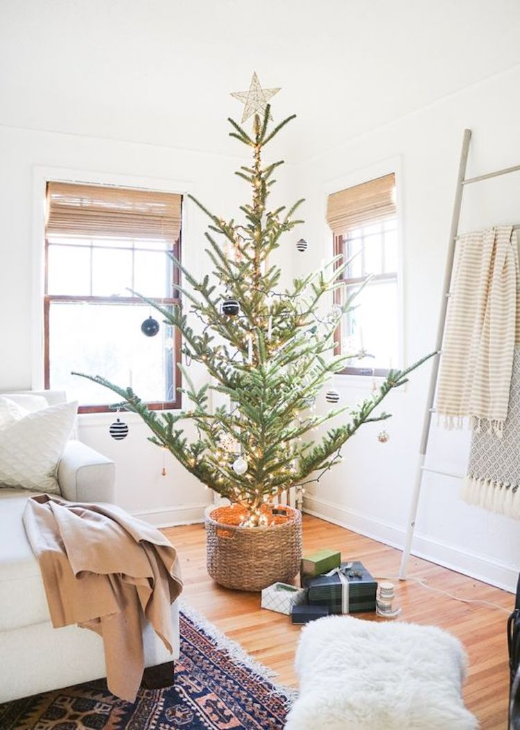 10 Ways to Reduce Waste This Holiday Season - Opt for a Potted Tree