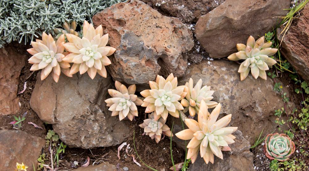nora-knox-succulents.png