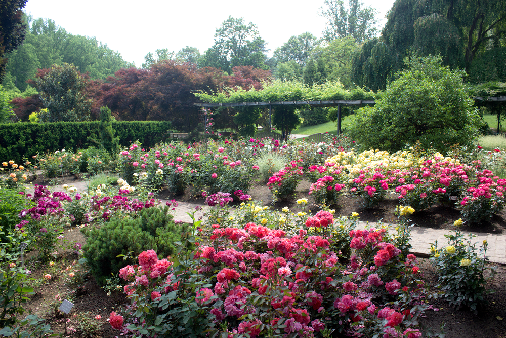 Botanical gardens maryland garden ftempo for Botanical gardens maryland