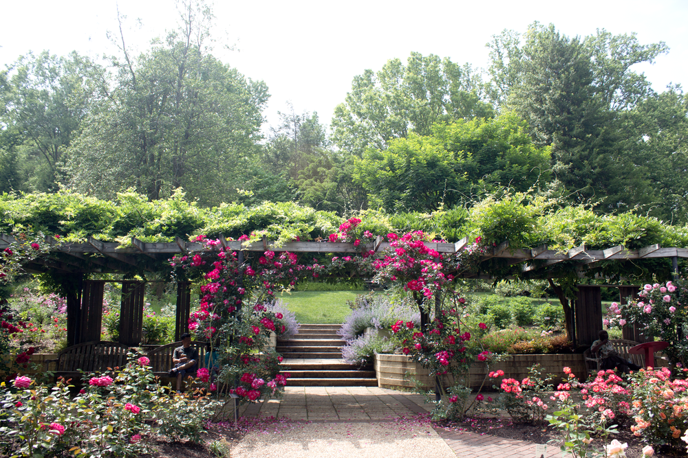 An Afternoon At Brookside Gardens And Wheaton Regional