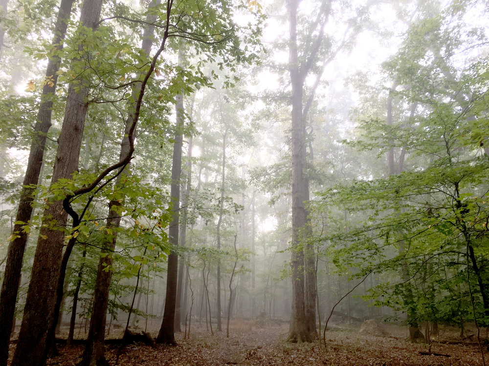 huntley-meadows-fairfax-virginia-nora-knox.jpg