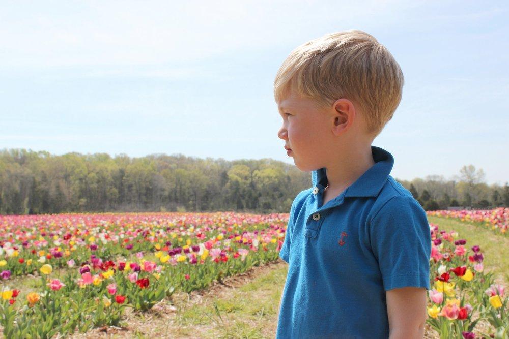 tulips-burnside-farms-nora-knox.jpg