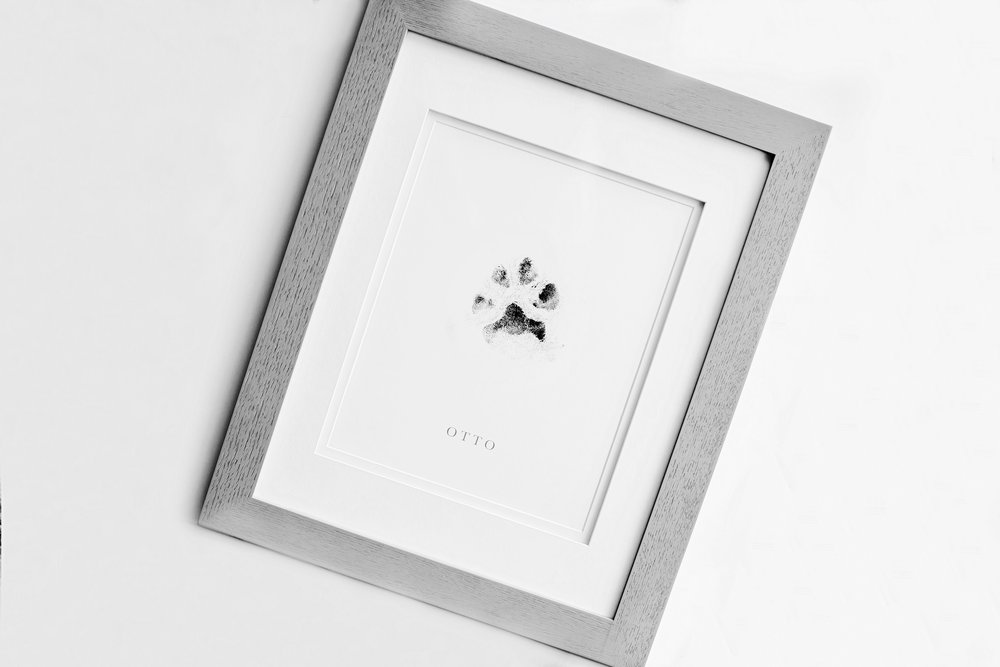 English_Bulldog_Paw_Print