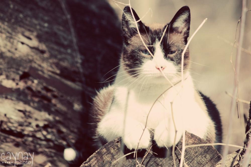 Beginner_Photographer_Cat_Portrait