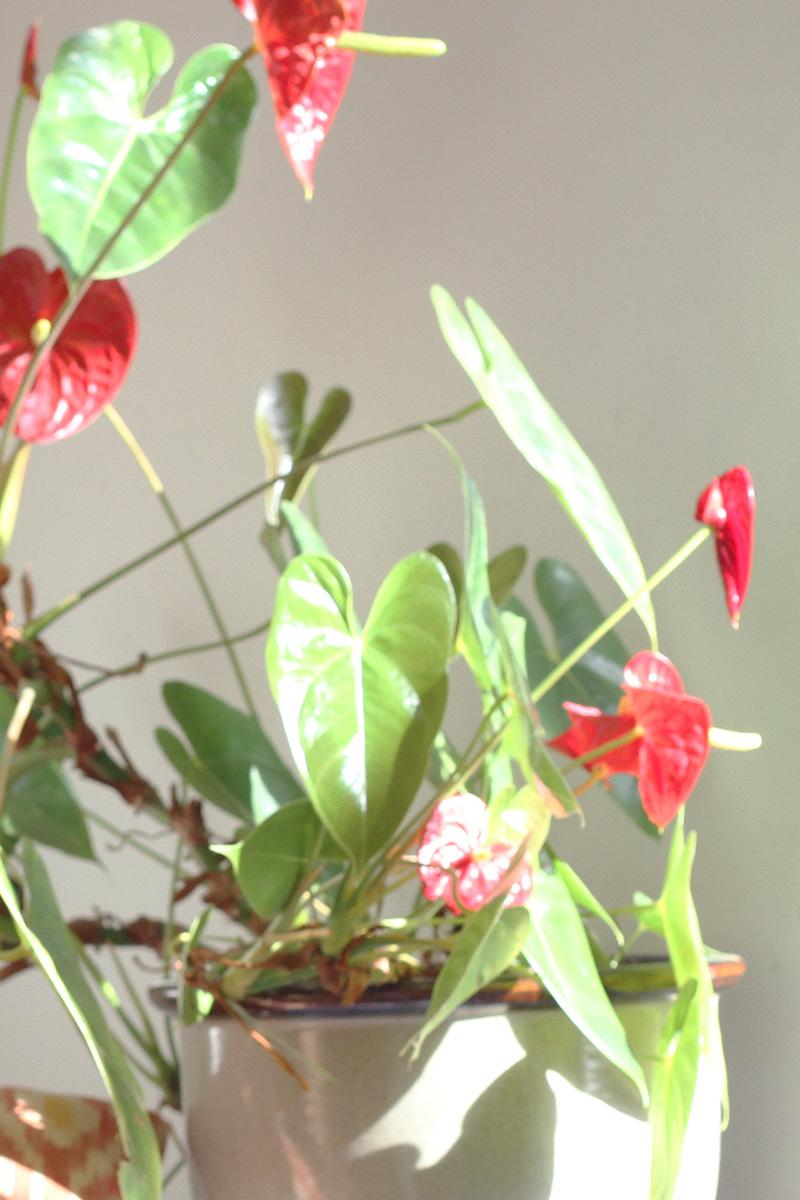 marion-mckee-plant.jpg