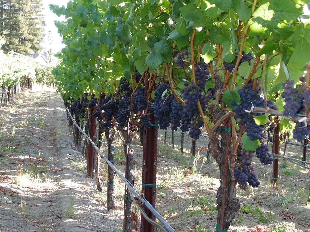 Wine Potentials