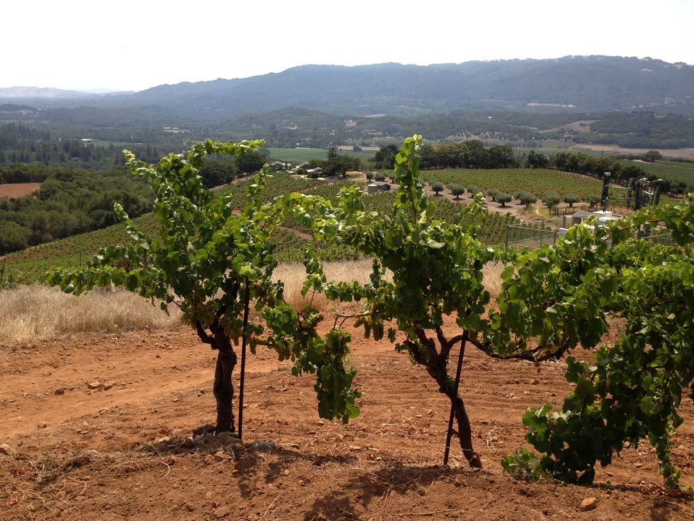 Chuy Vines Overlooking Valley Floor.jpg