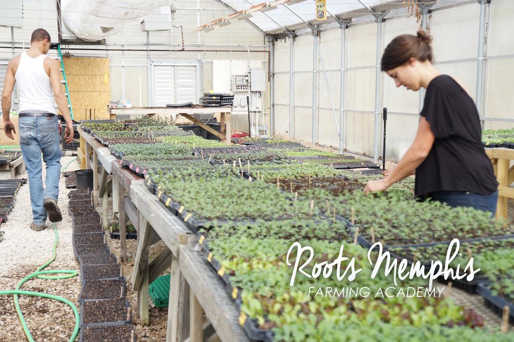 Andrea-Fenise-Roots-Memphis