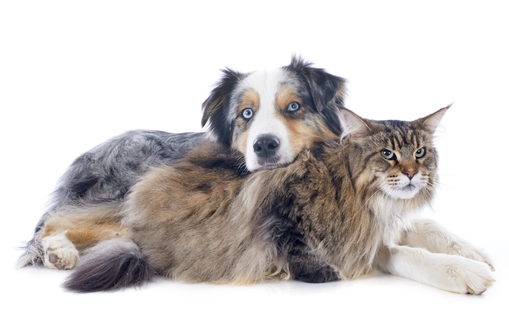 Healthy dogs and cats