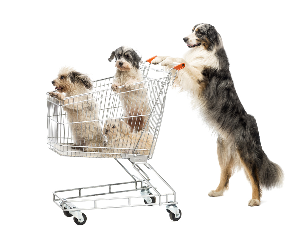 Dogs shopping for nutrition