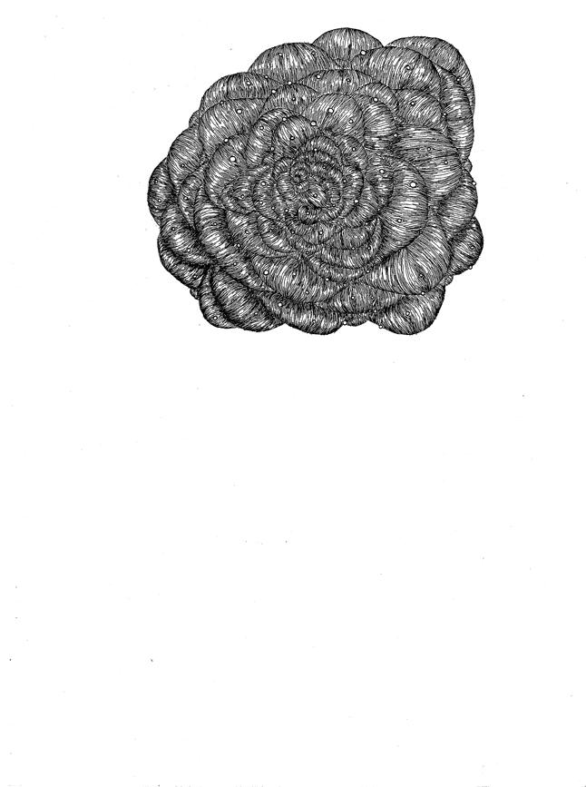 []knot_05.jpg