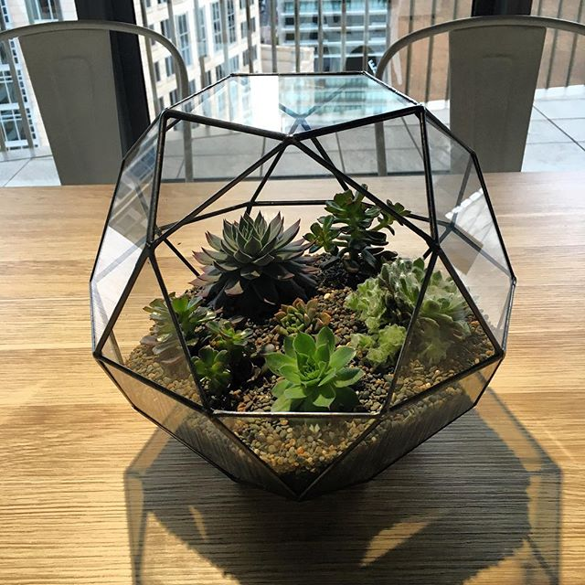 Our beautiful new office #terrarium 🌵 thank you @aloealoealoee