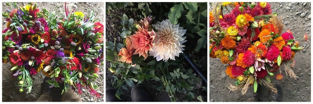 2018 website flower collage 2.jpg