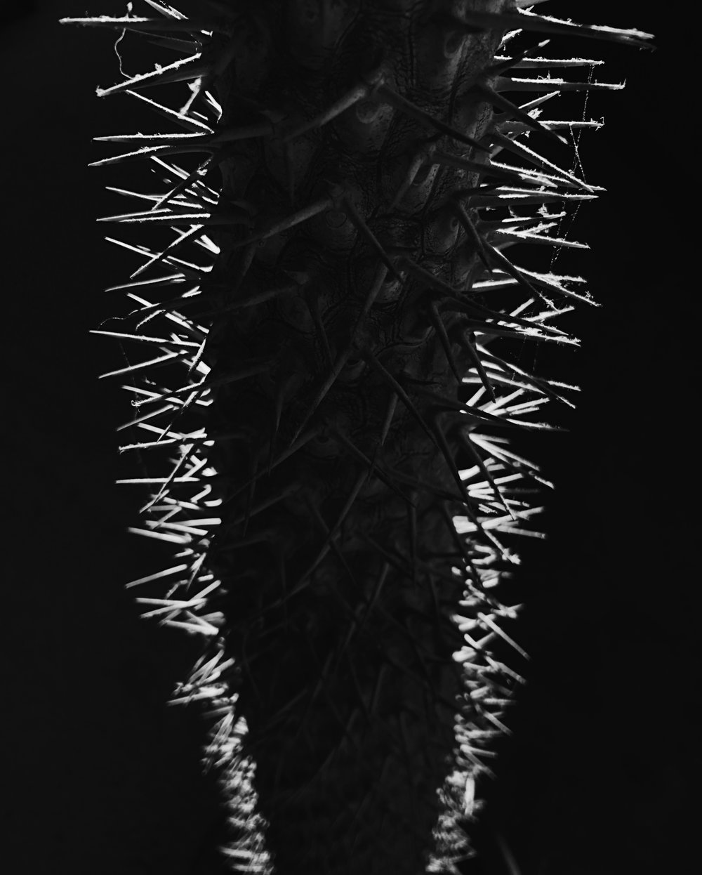 Spines, Chicago, 1/8/2017
