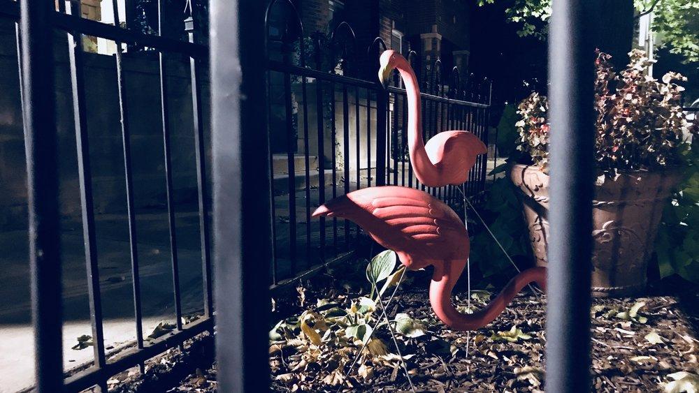 Flamingos, Chicago, 9/15/2017