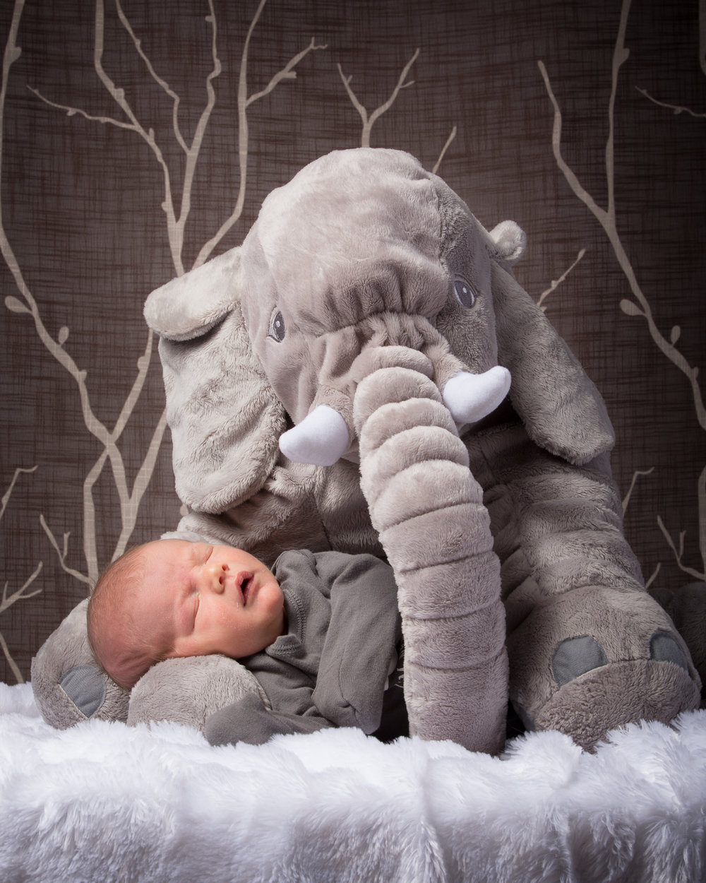 Carter-elephant.jpg