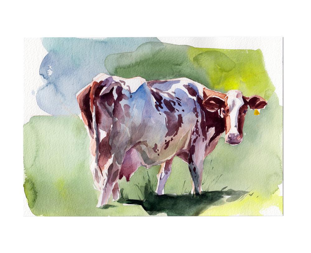 Cow_001.jpg