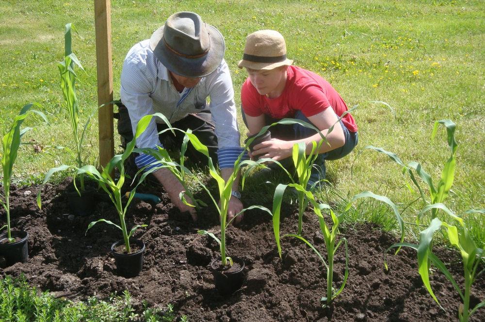 Det som görs här kallas inte trädgårdsterapi, men att vara i en trädgård och ta hand om den anses av många vara väldigt läkande och avstressande.
