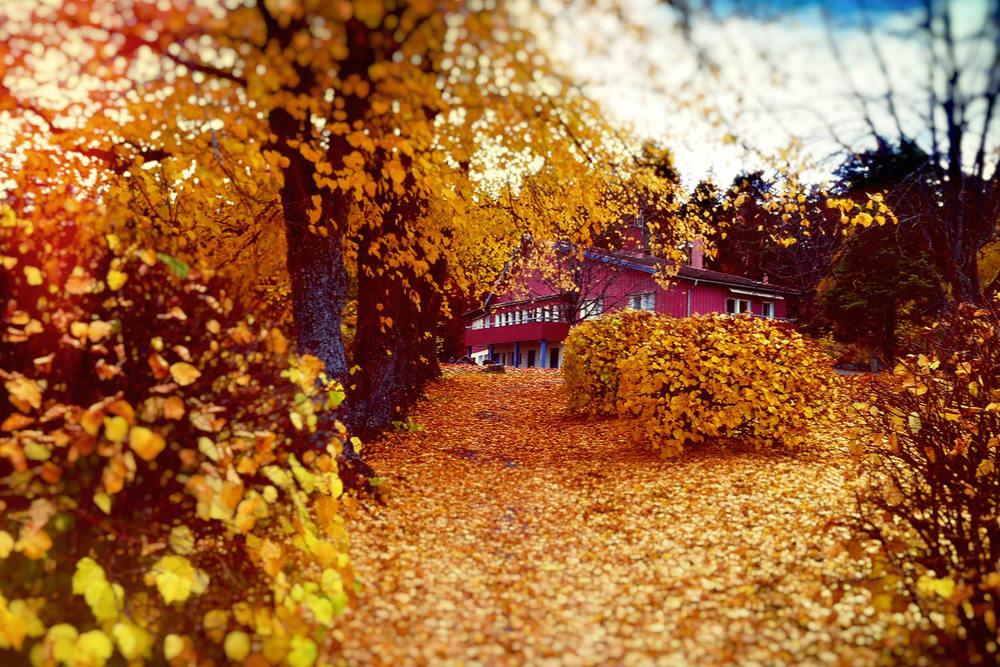 Med så mycket träd och buskar på Solberga så blir det också mycket löv på marken på hösten.