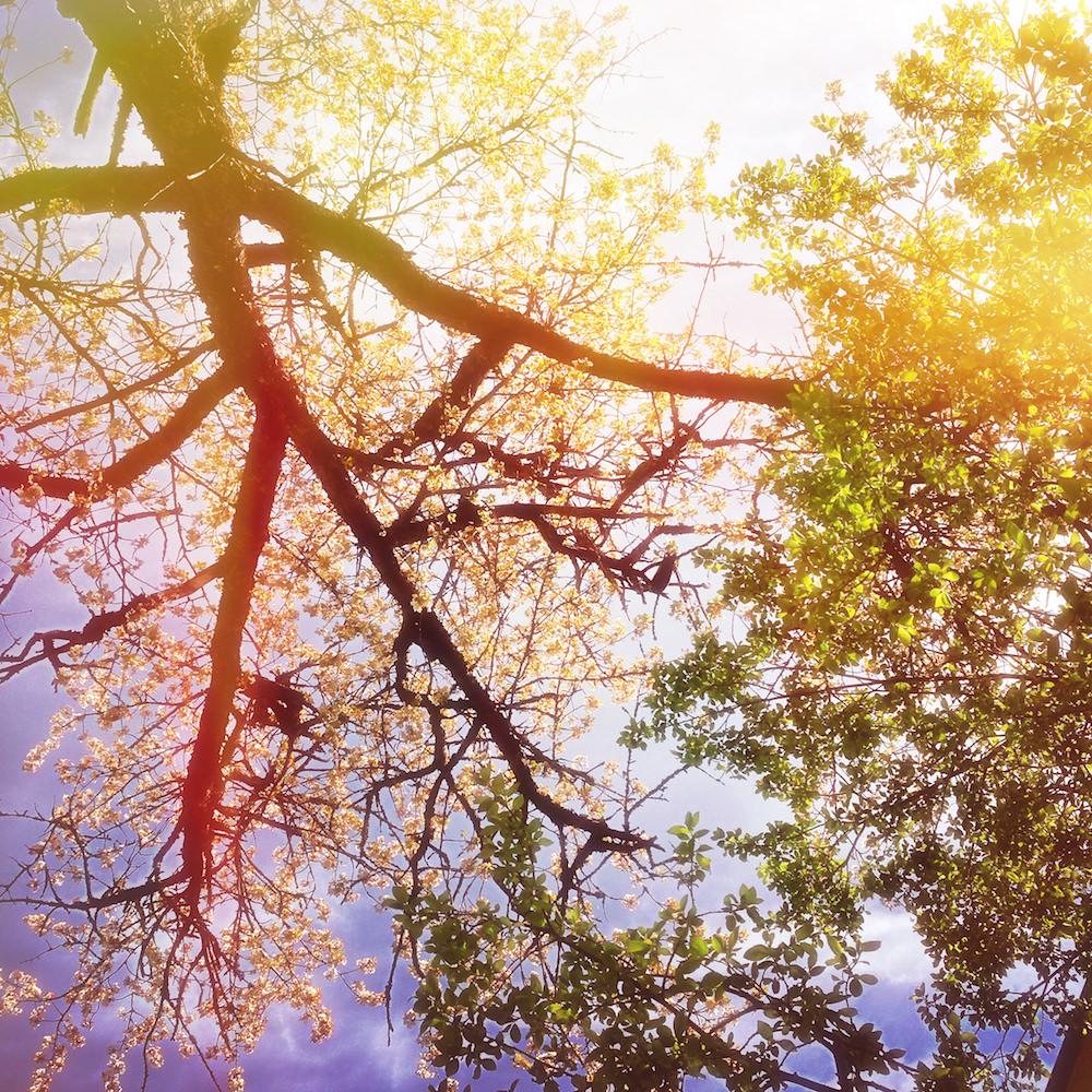 Eftersom det finns så många olika sorters träd och buskar på Solberga är variationen enorm, och det finns mycket att titta på, lukta på och känna på.