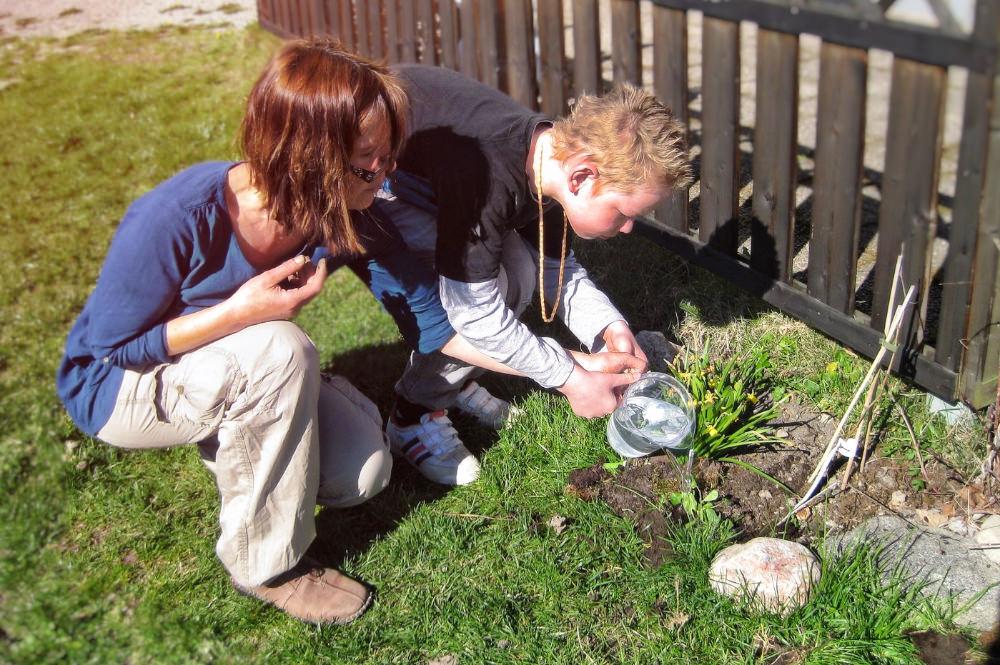 På vårenär det dags att så det som ska växa i skolträdgården till hösten.
