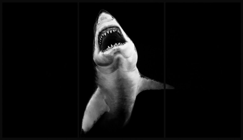 robert_longo_charcoal_shark