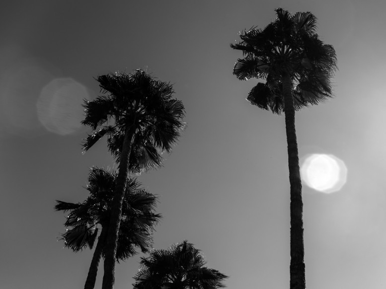 portrait_of_a_defeated_architecture_hedi_slimane_palm_springs_4