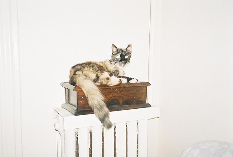 cat_obregon_franklin