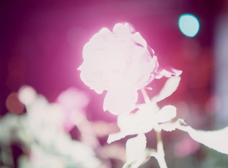 rinko-kawauchi-web_prize_photography