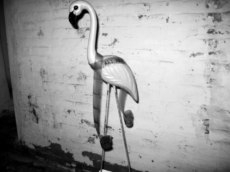 flamingo_adarsha-777x582.jpg