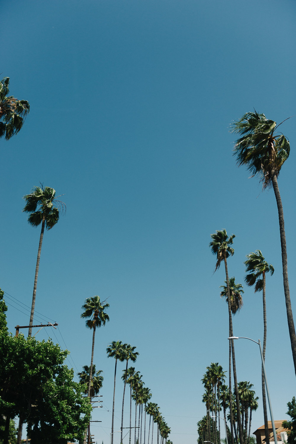 Los Angleles Photographer-11.jpg