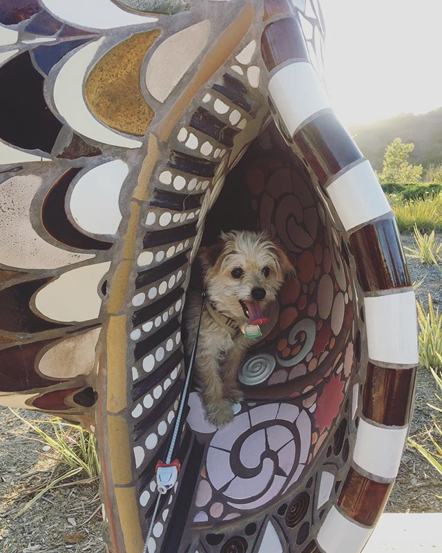 Chico really appreciates #publicart 😆 #dogsofinstagram #sculpture #mosaic #chico #walkinthepark #🐚 #🐶ina🐚