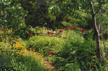 mo-garden.jpg