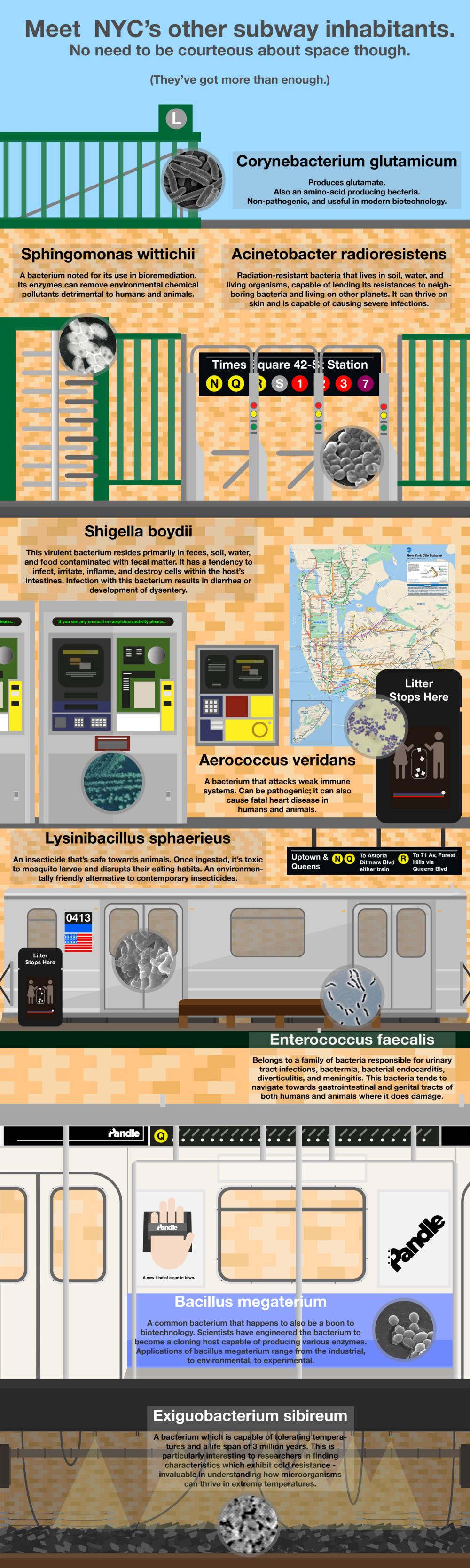 PandleHandle Infographic Long - Bacteria