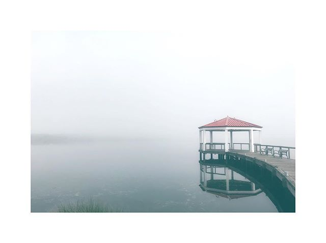 Foggy sunshine. • • • • • • • • • #photo #nature #lakeside #gloomy #instadaily #postoftheday #tbt #desing  #arttherapy #iphonepic #instaday #photoart #photograpy #florida #agameoftones #pixel #pixel_ig #collection #highsnobiety #wildlife #photographylovers