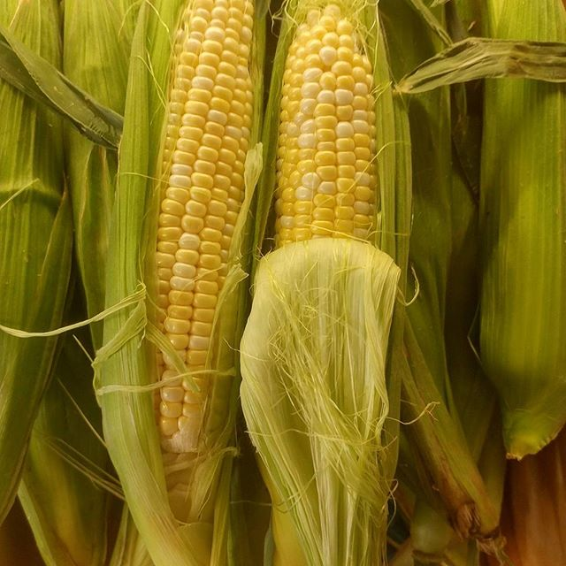 Need an ear? Fresh in, bicolor organic and local corn on the cobb!! If that isn't enough there's always Kohlrabi to switch things up a bit! #Bedstuy #freshandlocalproduce #Lancasterfarmfresh