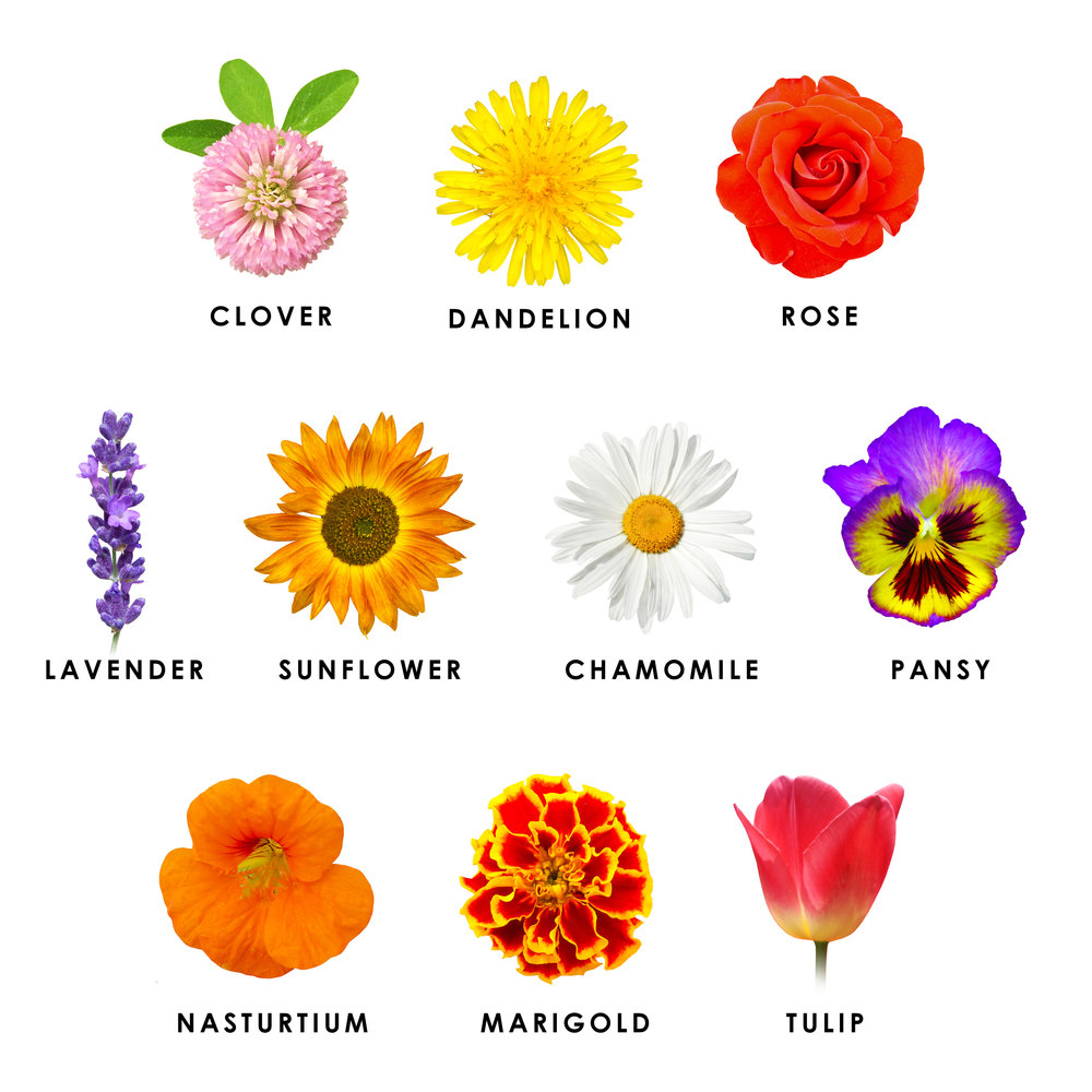 Some common flowers varieties