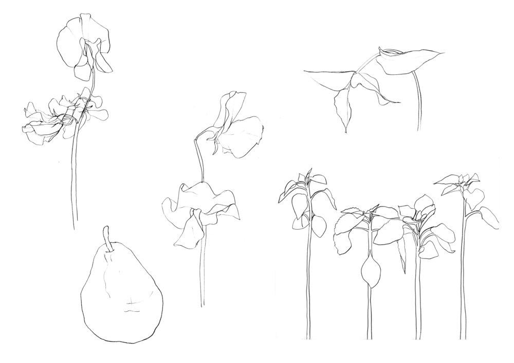 Ink Plants.jpg