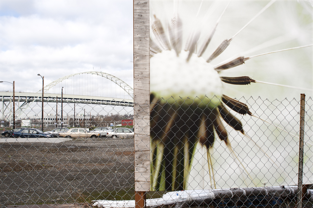fremont_bridge_and_dandelion_web.jpg