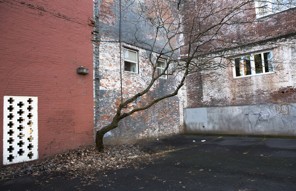 red_and_blue_wall_with_tree_parking_lot_SW_portland_web.jpg